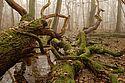 Blick auf eine mystische Waldlandschaft.